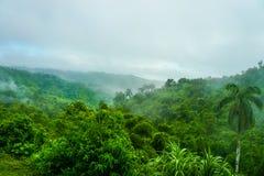 Bosque verde tropical Imagen de archivo libre de regalías