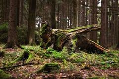Bosque viejo Imagen de archivo libre de regalías
