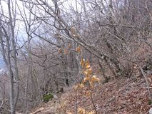 Bosque viejo cerca de Grza Fotos de archivo
