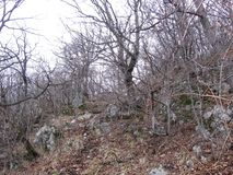 Bosque viejo cerca de Grza Foto de archivo