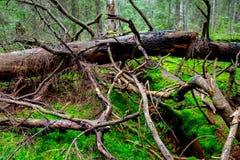 Bosque viejo en bosque profundo Fotos de archivo libres de regalías