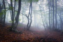 Bosque viejo oscuro misterioso en niebla Mañana del otoño en Crimea Imágenes de archivo libres de regalías