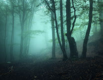 Bosque viejo oscuro misterioso en niebla Mañana del otoño en Crimea Fotografía de archivo libre de regalías