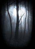 Bosque vignetted brumoso imagenes de archivo