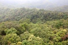 bosque virginal Fotografía de archivo libre de regalías