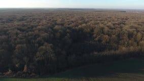 Bosque visto de abejón metrajes