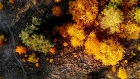 Bosque visto de arriba Bosque hermoso, colorido en otoño metrajes
