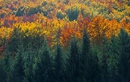 Bosque y árboles con las diversas hojas de los colores del otoño Fotografía de archivo libre de regalías