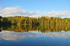 Bosque y árboles viejos debajo del cielo azul en la orilla del lago Fotografía de archivo