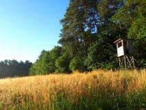 Bosque y área de la búsqueda fotos de archivo libres de regalías
