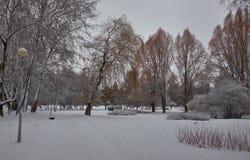 Bosque y arbustos congelados coloridos del invierno con los árboles nevados imagen de archivo