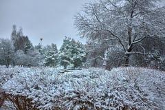 Bosque y arbustos congelados coloridos del invierno con los árboles nevados imágenes de archivo libres de regalías