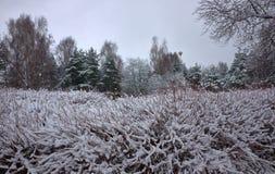 Bosque y arbustos congelados coloridos del invierno con los árboles nevados imagenes de archivo