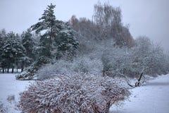 Bosque y arbustos congelados del invierno con los árboles nevados fotografía de archivo libre de regalías