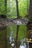 Bosque y cala Fotografía de archivo libre de regalías