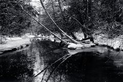 Bosque y cala nevados del invierno Imágenes de archivo libres de regalías