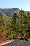 Bosque y camino Imagen de archivo libre de regalías