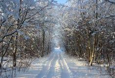 Bosque y camino del invierno después del nevadas en la Navidad en los muertos fotos de archivo libres de regalías