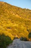 Bosque y camino densos Imagenes de archivo