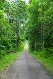 Bosque y camino verdes Fotografía de archivo