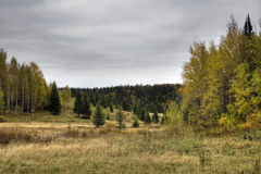 Bosque y campo Imagenes de archivo