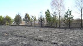 Bosque y campo quemados despu?s del incendio fuera de control, tierra negra, cenizas, humo, tiempo peligroso del proyecto, cat?st almacen de metraje de vídeo