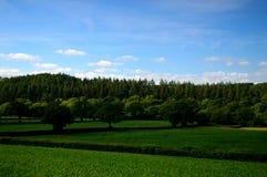 Bosque y campos verdes Fotografía de archivo libre de regalías