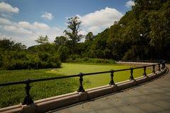 Bosque y charca del verano Fotografía de archivo libre de regalías