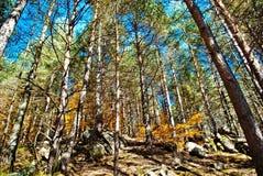 Bosque y cielo fotografía de archivo