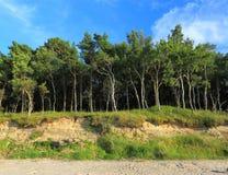 Bosque y cielo. Foto de archivo libre de regalías