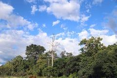 Bosque y cielo Imágenes de archivo libres de regalías