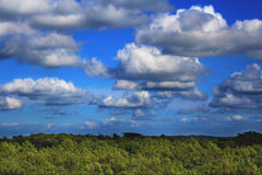 Bosque y cielo Fotos de archivo libres de regalías