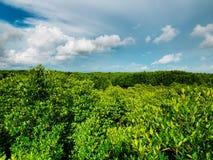 Bosque y cielo azul imagenes de archivo