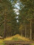 Bosque y cielo azul Fotos de archivo
