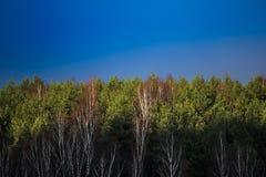 Bosque y cielo de la primavera Imágenes de archivo libres de regalías