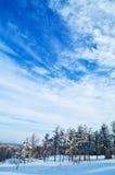 Bosque y cielo del invierno Imágenes de archivo libres de regalías