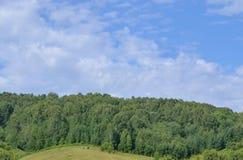 Bosque y cielo Paisaje del VERANO Fotografía de archivo libre de regalías