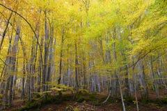 Bosque y hojas en colores otoñales fotografía de archivo