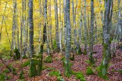 Bosque y hojas en colores otoñales foto de archivo