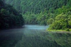 Bosque y la niebla Fotografía de archivo libre de regalías