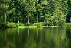 Bosque y lago foto de archivo