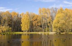 Bosque y lago del otoño Fotografía de archivo