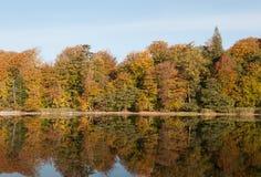 Bosque y lago del otoño Imagen de archivo libre de regalías