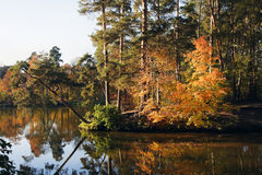 Bosque y lago del otoño Foto de archivo libre de regalías