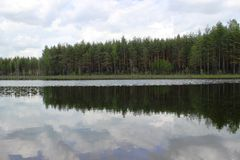 Bosque y lago del pino Foto de archivo