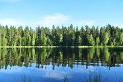 Bosque y lago en el verano Foto de archivo