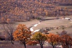 Bosque y lecho de un río seco Fotografía de archivo