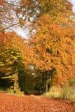 Bosque y manera Foto de archivo