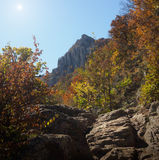 Bosque y montaña Imágenes de archivo libres de regalías