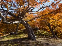 Bosque y montaña Imagen de archivo libre de regalías
